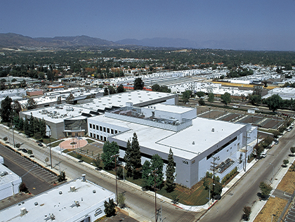 Photo of Chatsworth Plant